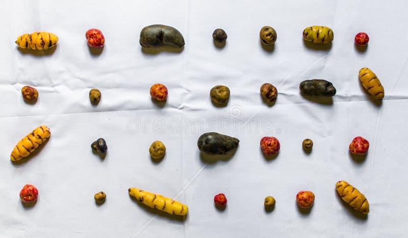 Batatas coloridas e tubérculos bolivianos e peruanos contra o fundo colorido fotos de stock