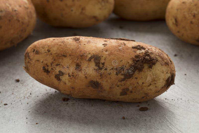 Batatas cruas escolhidas frescas de Diamant imagem de stock