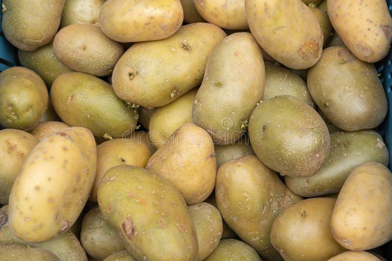 Batatas cruas frescas fotos de stock