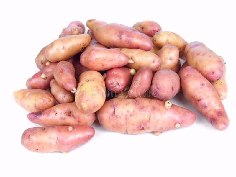 Batatas do peixe pequeno de Rosa fotos de stock royalty free