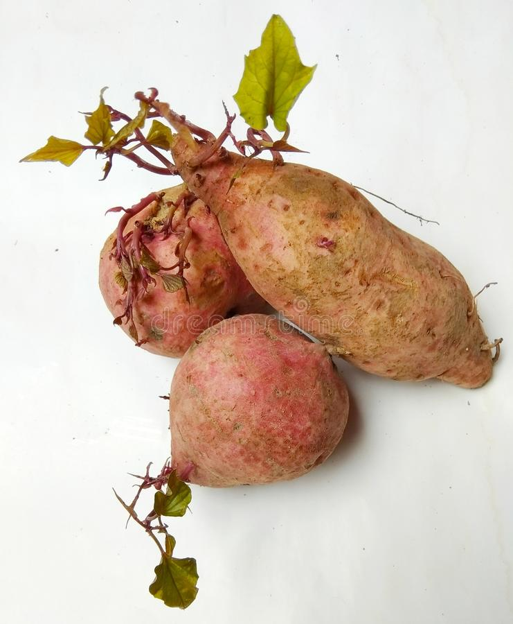Batatas doces no branco do backgroud fotos de stock