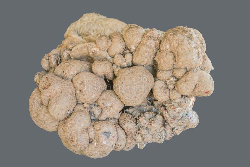 Batatas doces principais grandes tailandesas fotos de stock