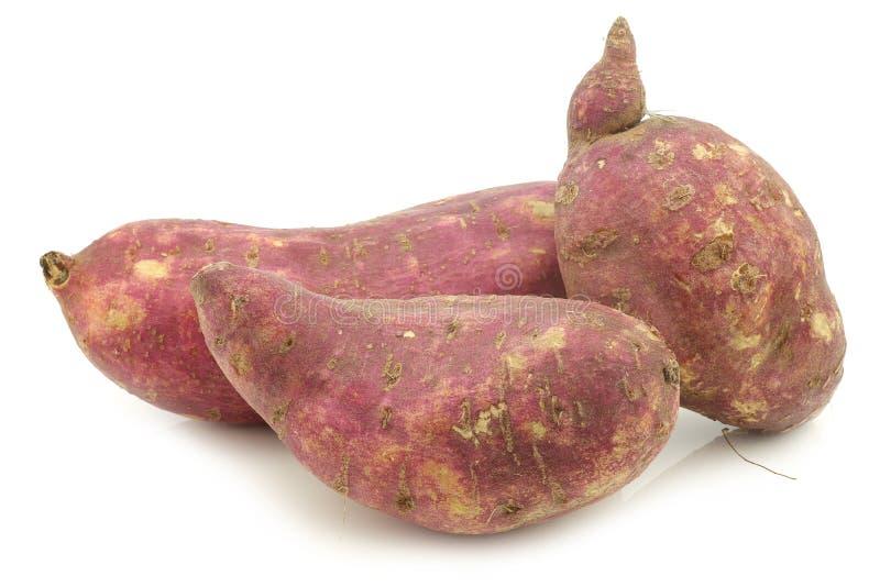 Batatas doces recentemente colhidas foto de stock