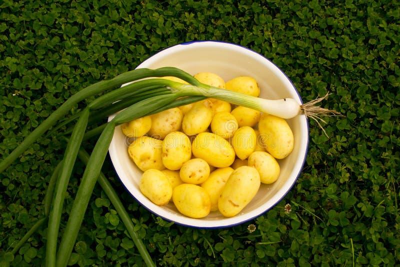 Batatas e cebola frescas fotografia de stock