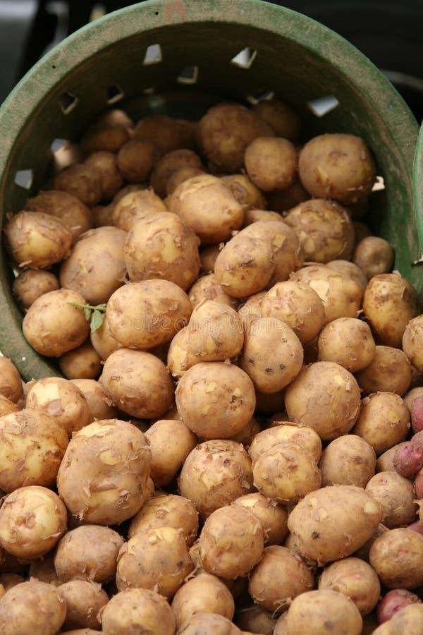 Batatas na cesta no mercado do fazendeiro foto de stock royalty free