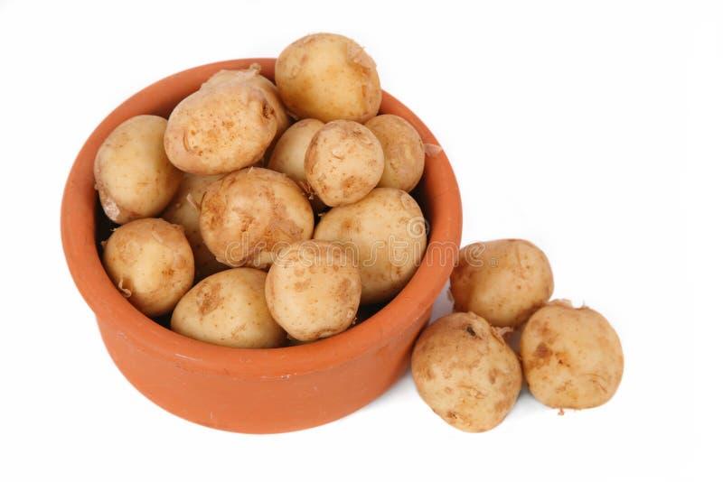 Batatas novas fotos de stock royalty free