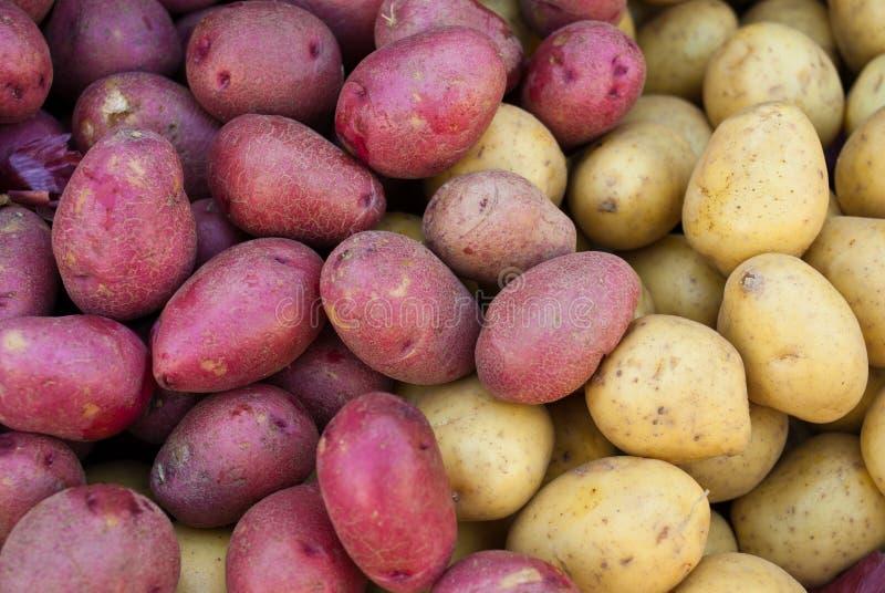 Batatas vermelhas e amarelas orgânicas imagens de stock