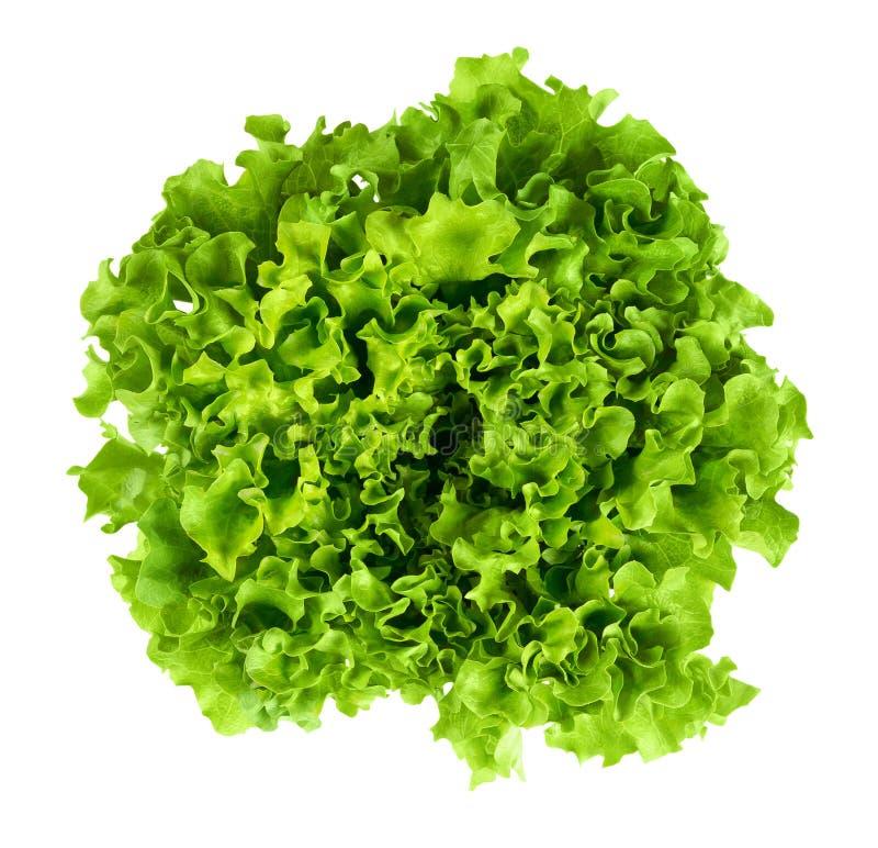 Batavia huvud av grönsallat från ovannämnt på vit bakgrund arkivfoto