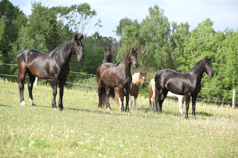Batch of horses on pasturage. In summer royalty free stock images