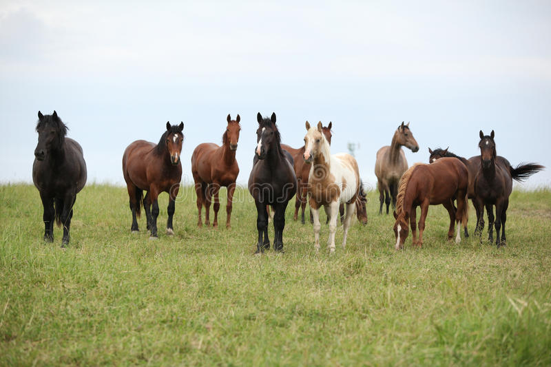 Download Batch Of Horses Resting On Pasturage Stock Photo - Image: 30271854