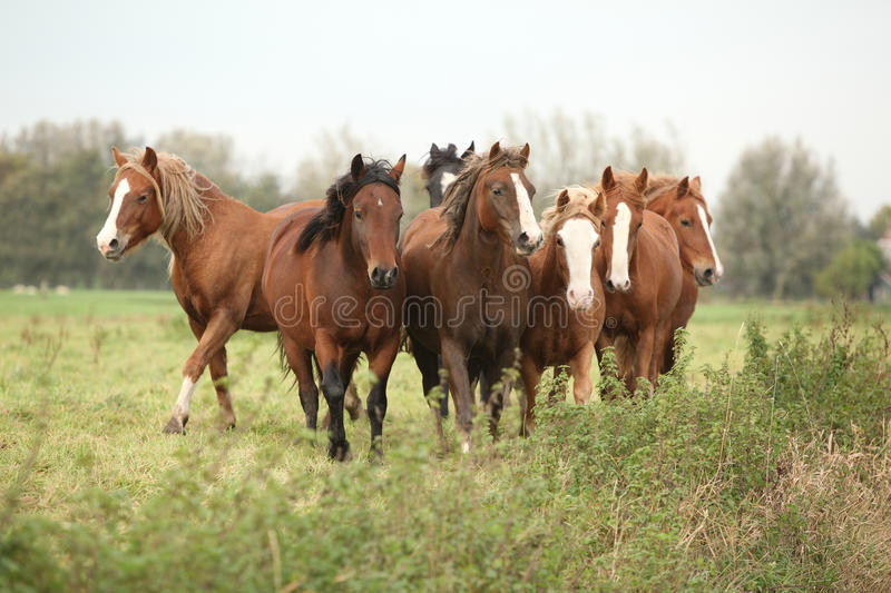 Download Batch Of Young Ponnies On Autumn Pasturage Stock Photo - Image: 30523926