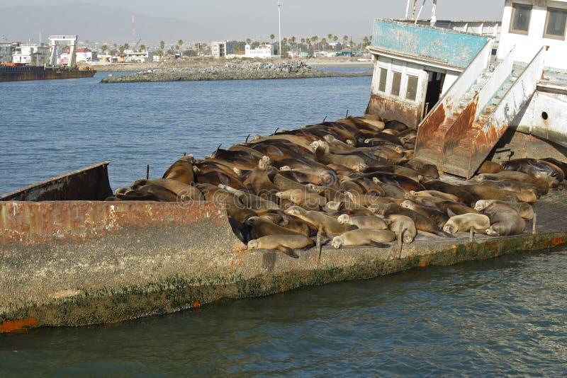 Bateau abandonné avec la mer lions07 photos libres de droits