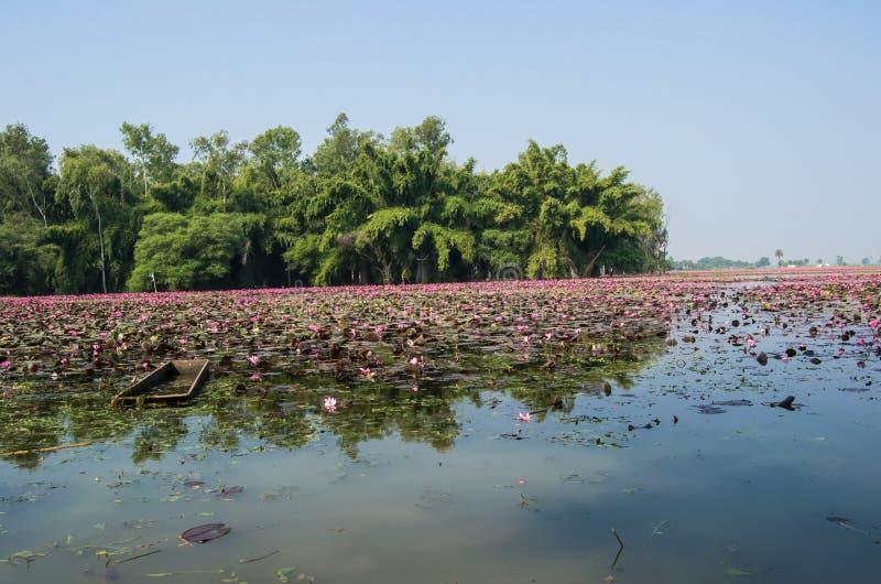 Bateau dans une eau Lilly Trees de lac et le paysage photo libre de droits