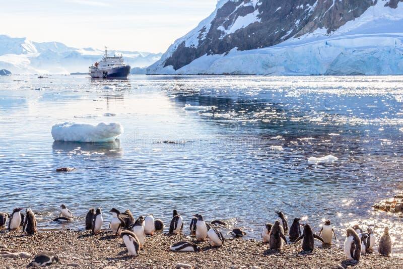 Bateau de croisière touristique dans la lagune antarctique parmi la colonie d'icebergs et de pingouins de Gentoo sur le rivage de image libre de droits
