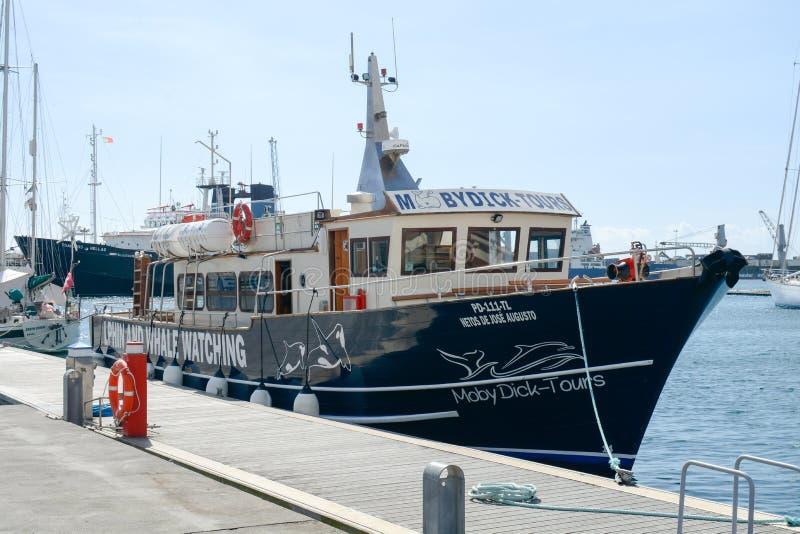Bateau de observation de visite de baleine photo libre de droits