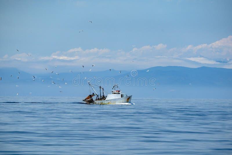 Bateau de pêche de pêcheur avec beaucoup de mouettes photos stock
