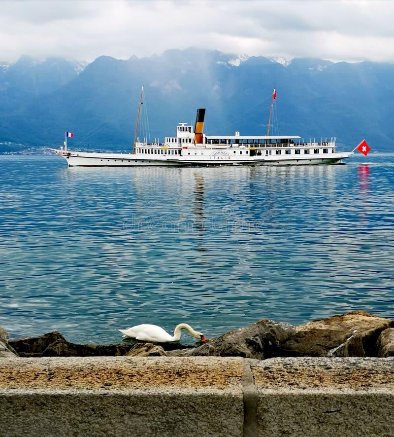 """Bateau suisse """"Italie """"près du rivage avec une consommation de cygne photographie stock"""