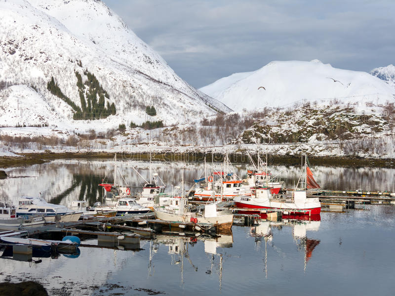 Bateaux dans le port Sildpollen, îles de Lofoten, Norvège photo libre de droits