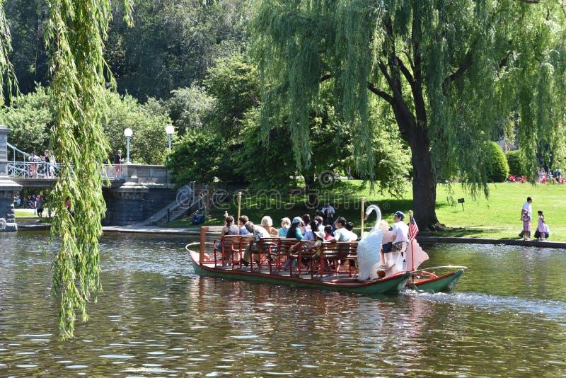 Bateaux de cygne au jardin public à Boston, le Massachusetts images stock