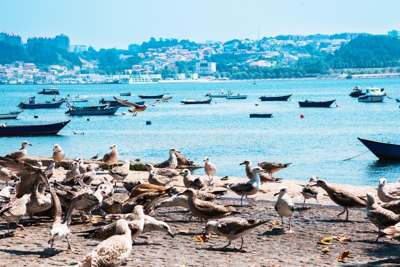 Bateaux de pêche sur la rivière de Douro porto portugal photographie stock