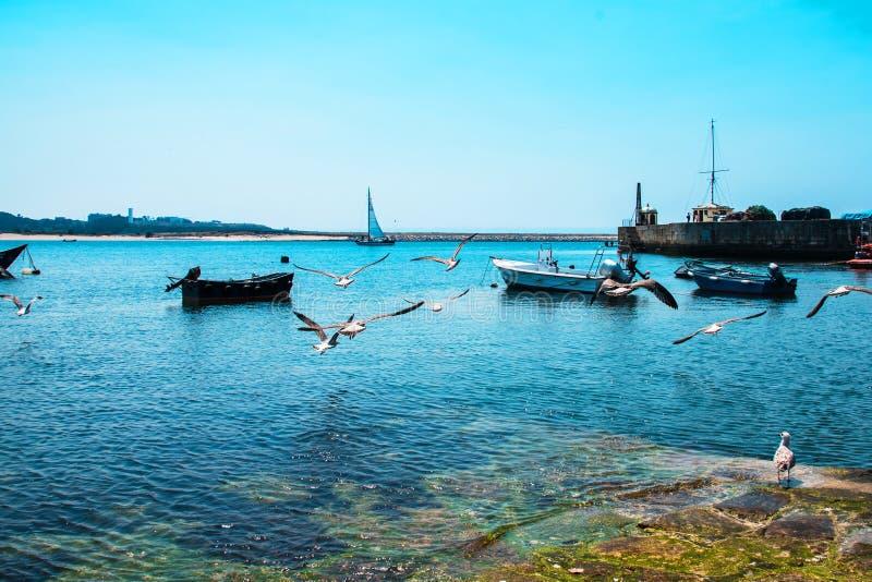 Bateaux de pêche sur la rivière de Douro porto portugal photos libres de droits