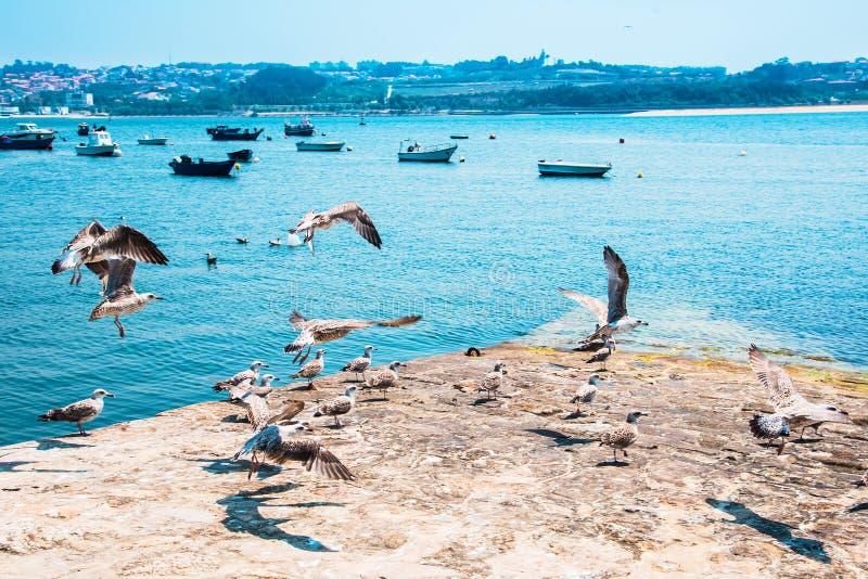 Bateaux de pêche sur la rivière de Douro porto portugal photographie stock libre de droits