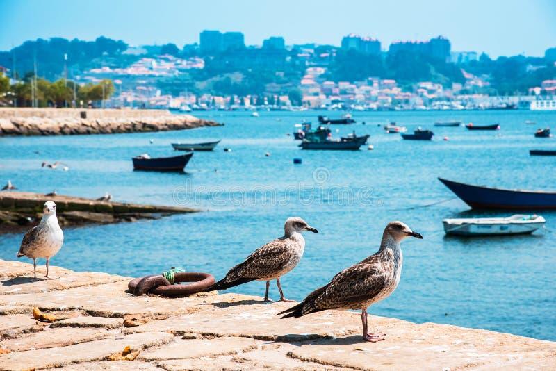 Bateaux de pêche sur la rivière de Douro porto portugal images stock