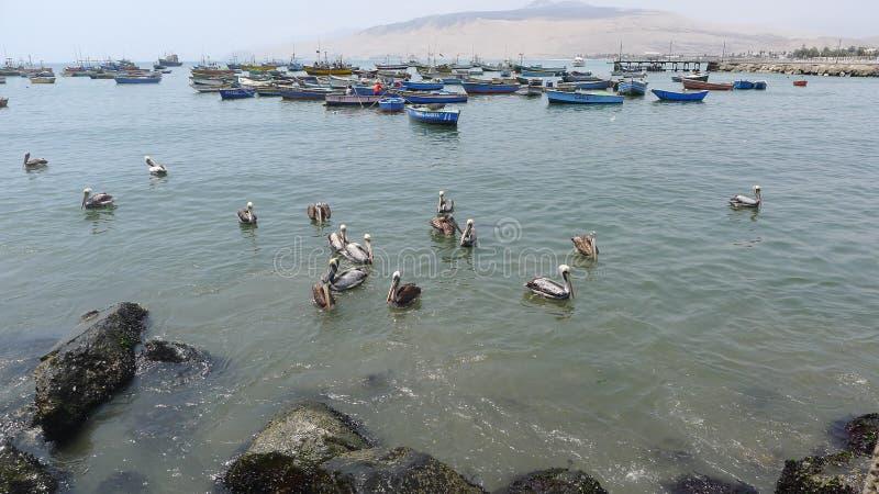 Bateaux et pélicans de pêche rustiques dans l'Ancon photos stock