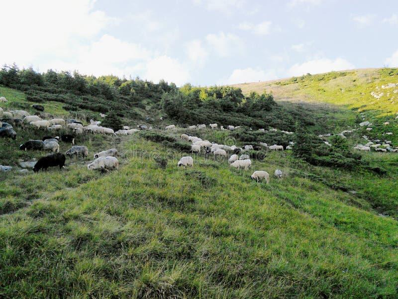 Bateaux sur des montagnes de Carpatian photo stock