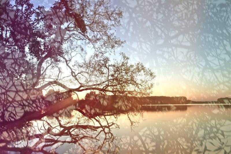 Batería del lago fotografía de archivo libre de regalías