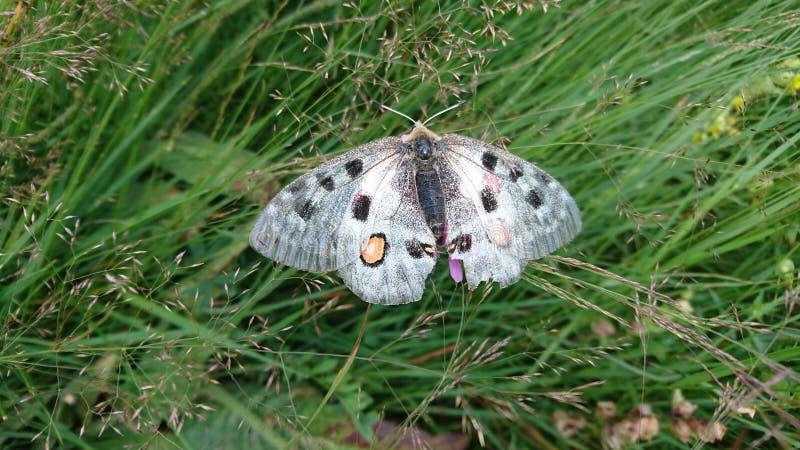 Baterfly in gras royalty-vrije stock afbeeldingen