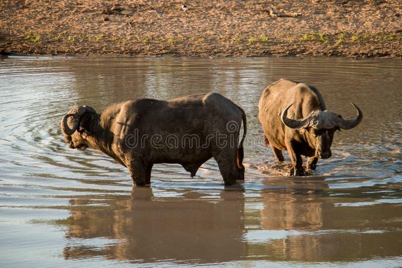 Bath de Buffalo photo libre de droits