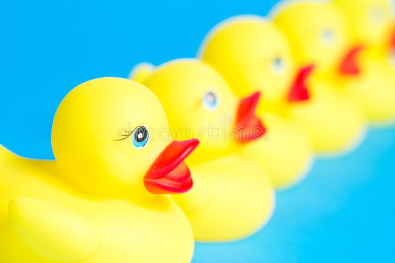 Bath ducks in a row royalty free stock photo