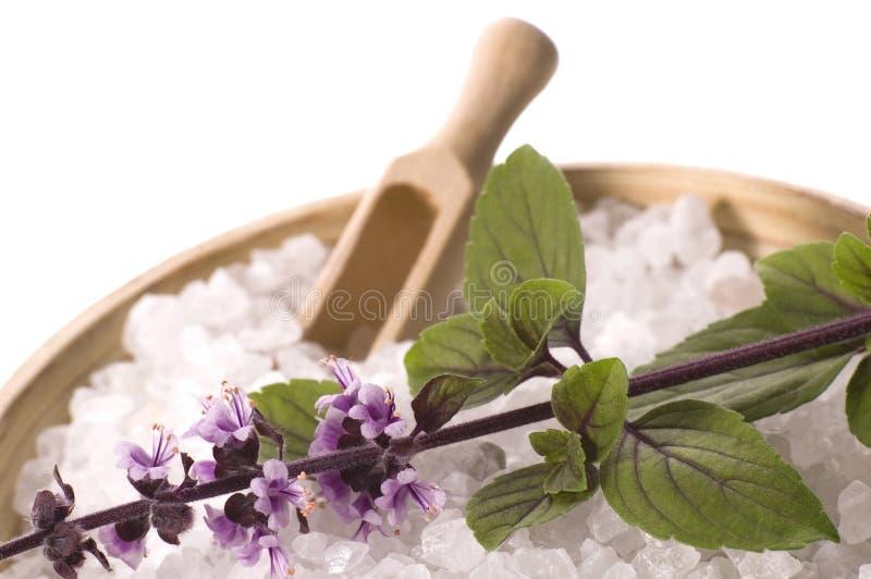 Bath salt and fresh basil royalty free stock photography