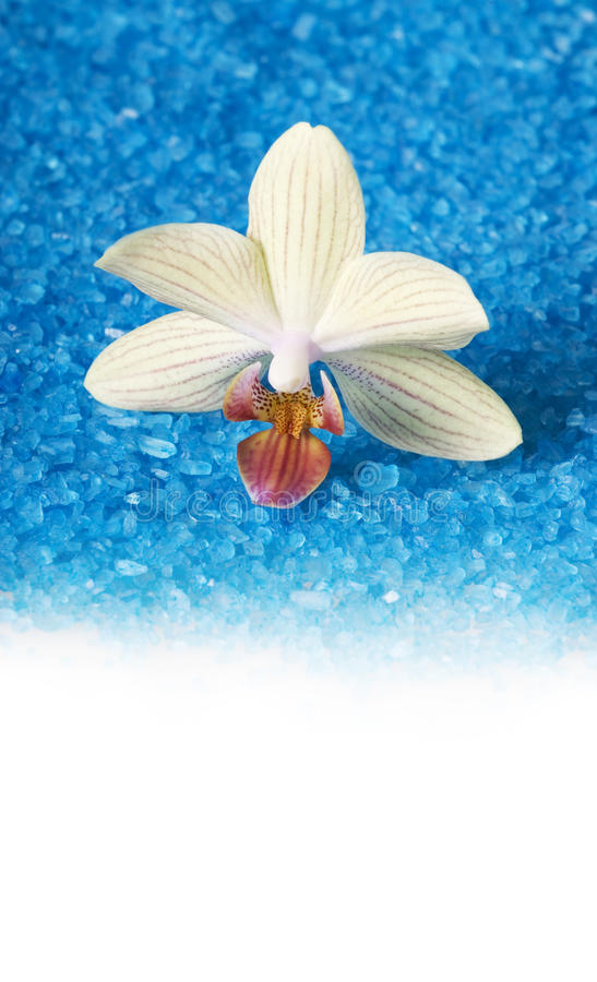 Bath sea salt with orchid royalty free stock photography
