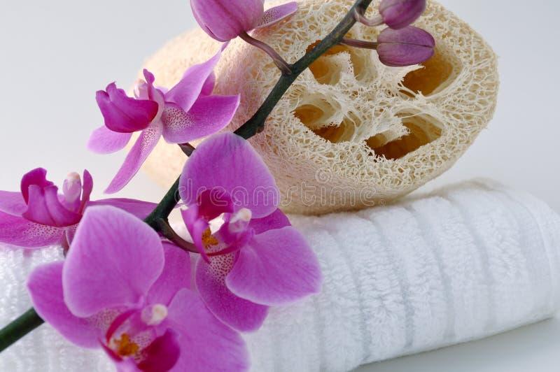 Download Bath time stock image. Image of pamper, holistic, towels - 11841713