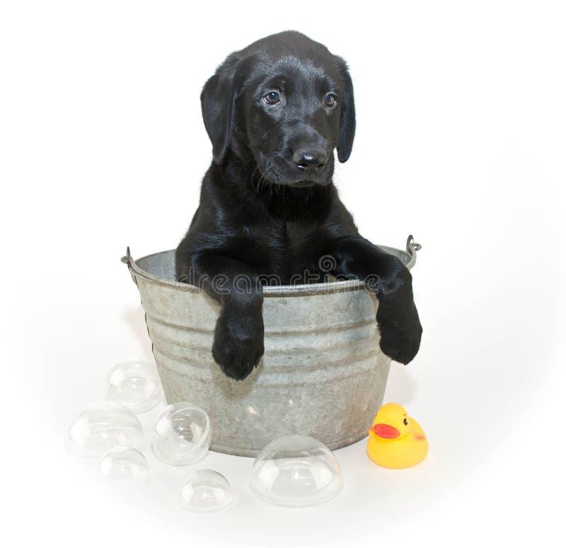 Bath Time Stock Image Image 34964411