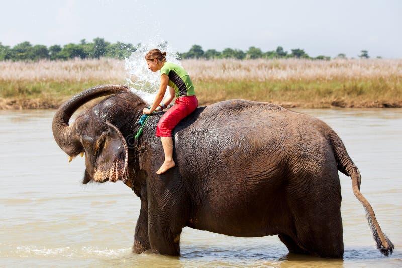 Bathing with elephant royalty free stock photo