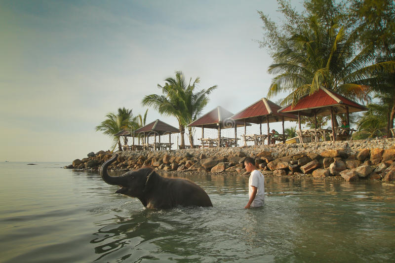 Bathing elephants in the Gulf of Siam stock photo