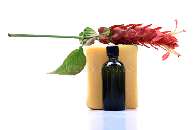 Download Bathing soap and oil stock photo. Image of soap, studio - 17563286