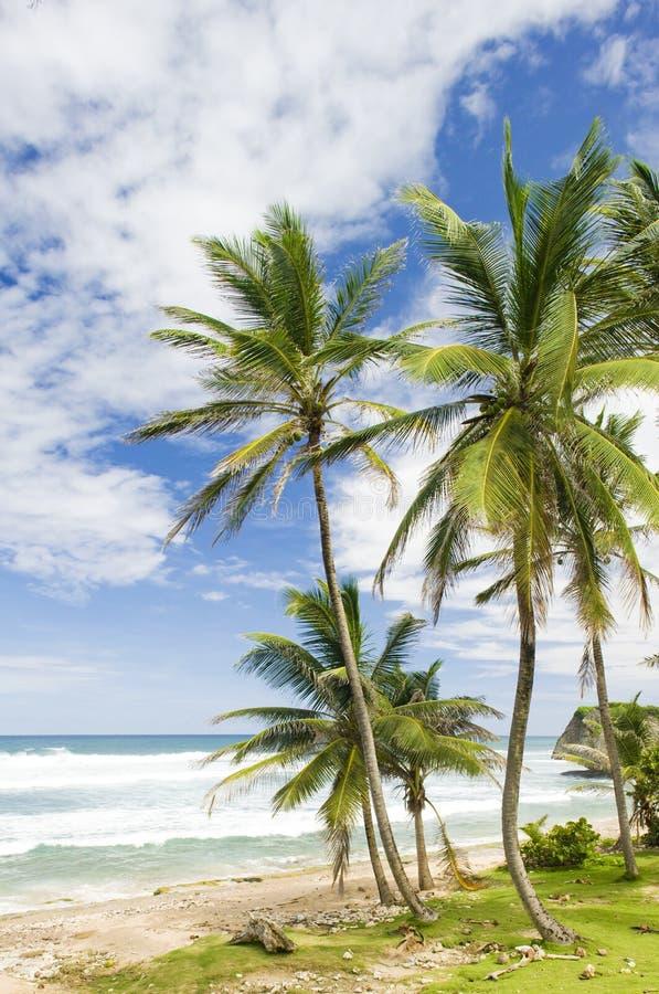 Bathsheba, costa del este de Barbados, el Caribe foto de archivo libre de regalías