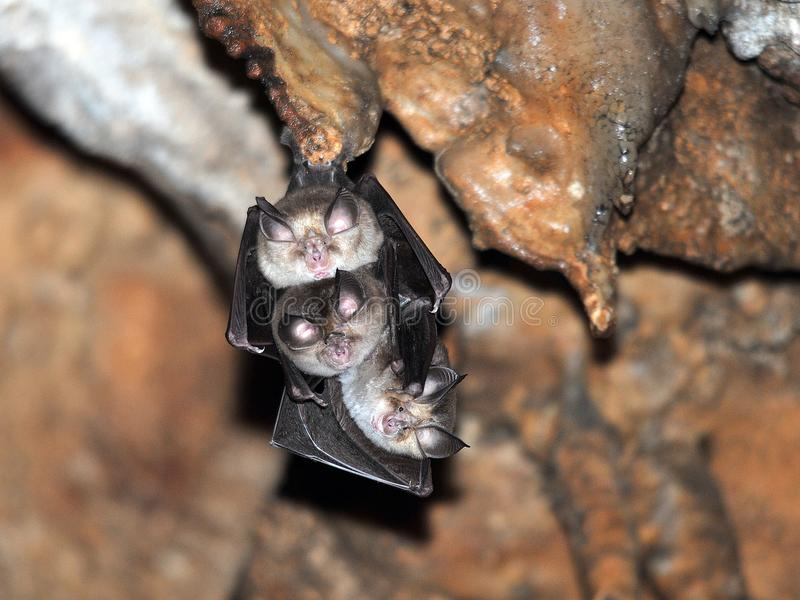 Bats in the cave royalty free stock images