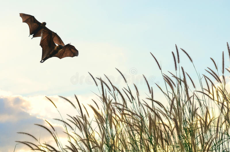 Bats flying in spring season sky for background usage. Halloween festival stock photography