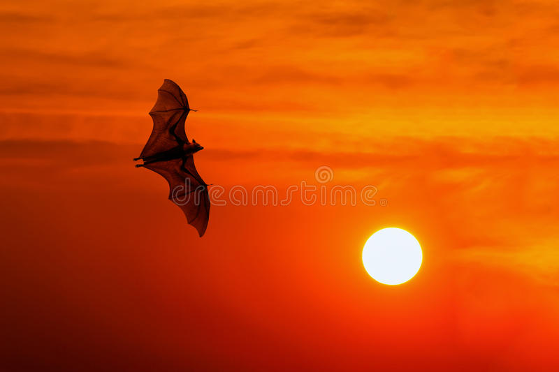 Bats flying at sunset royalty free stock photos