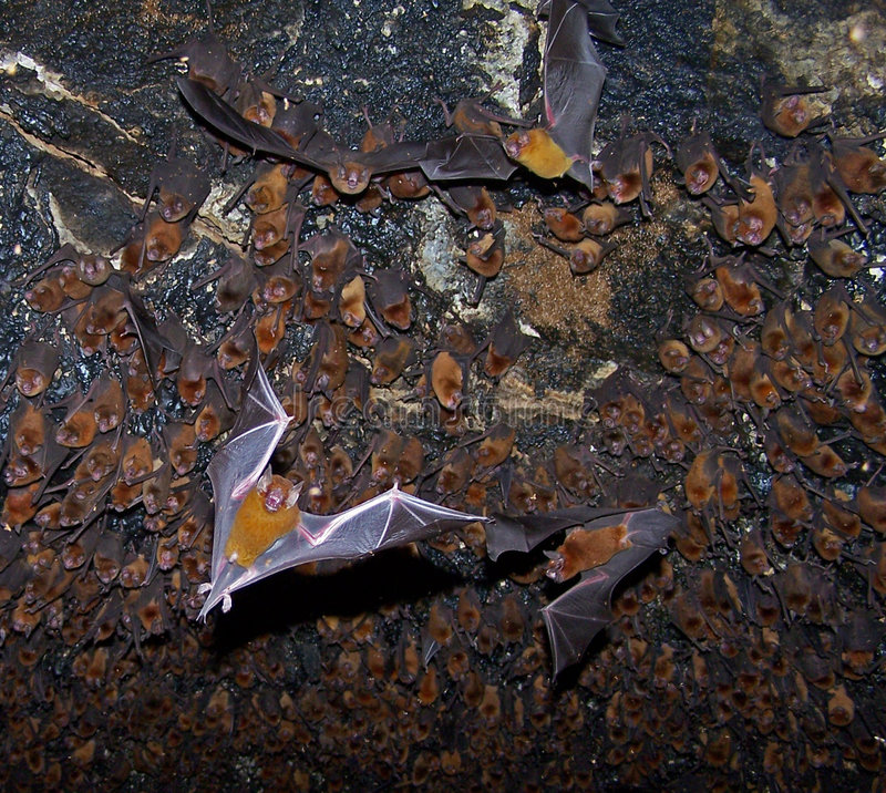 Free Bats In A Cave. Stock Photos - 2514413