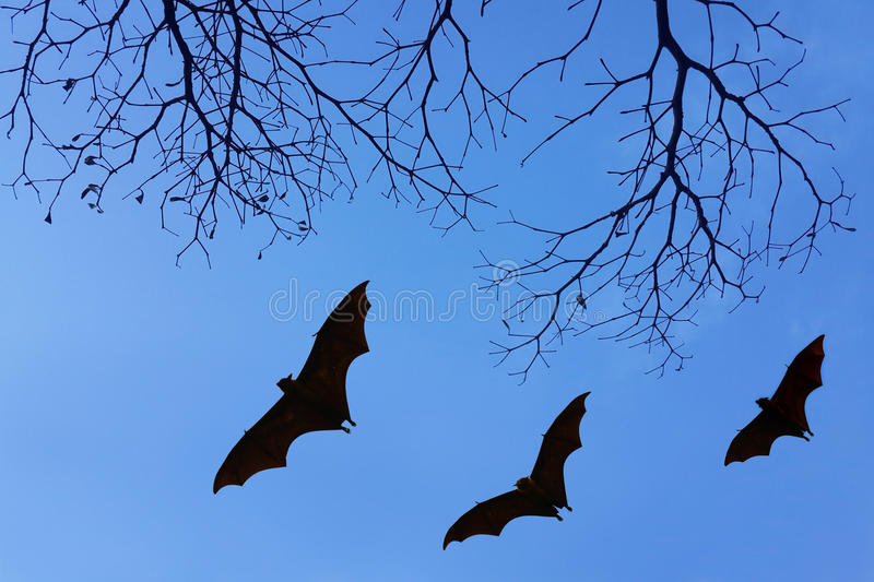 Bats silhouettes and beautiful branch for background usage.  stock images