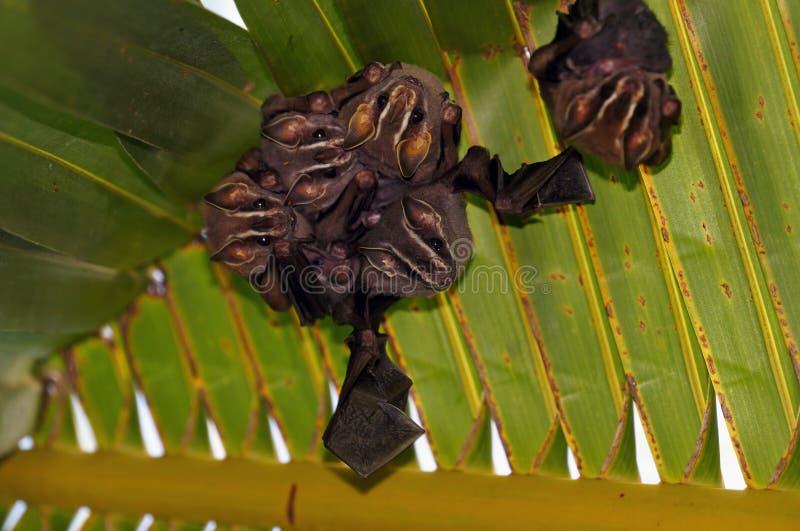 Bats under palm tree royalty free stock photos