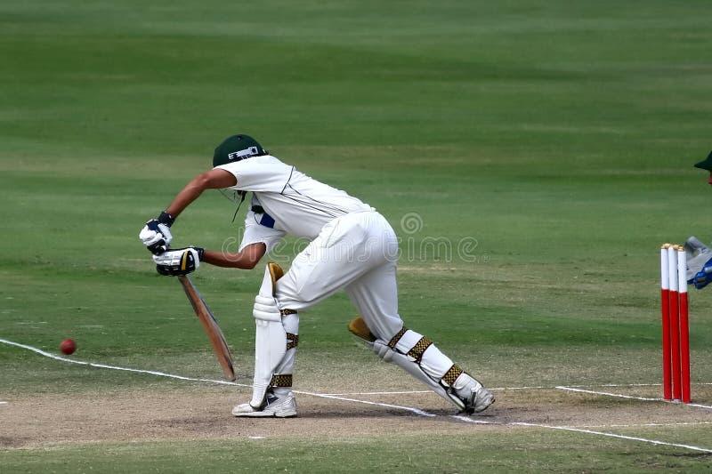 batsmansyrsa royaltyfri fotografi