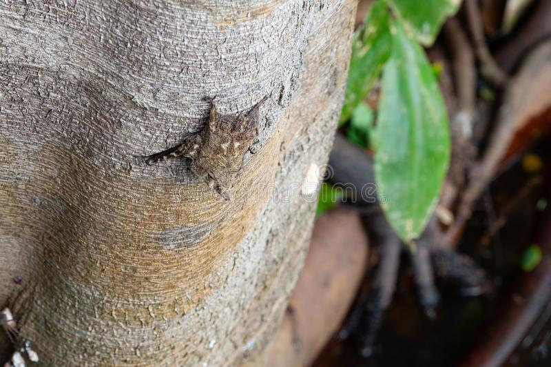 Batte sur un arbre image libre de droits