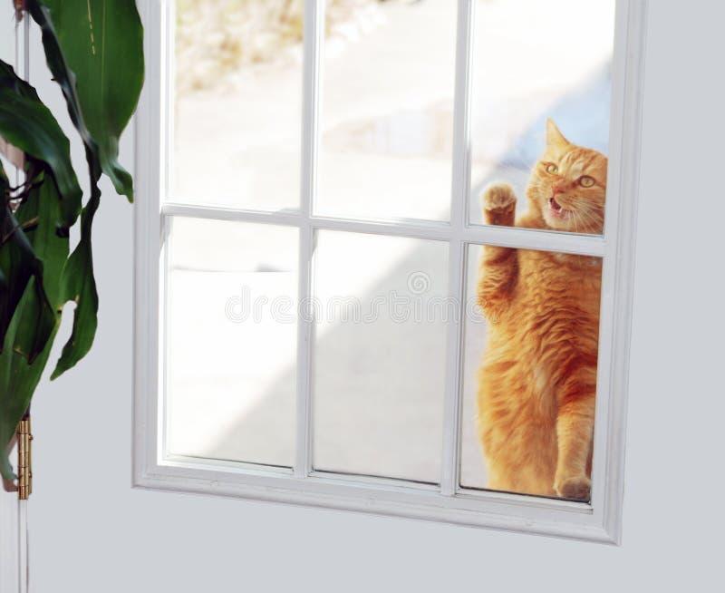 Battente del gatto fotografia stock libera da diritti
